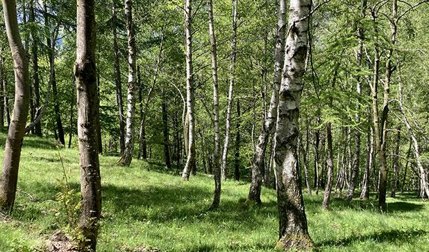 Estensione della certificazione di sostenibilità forestale